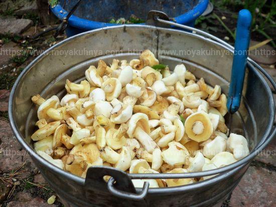 как очистить грибы маслята