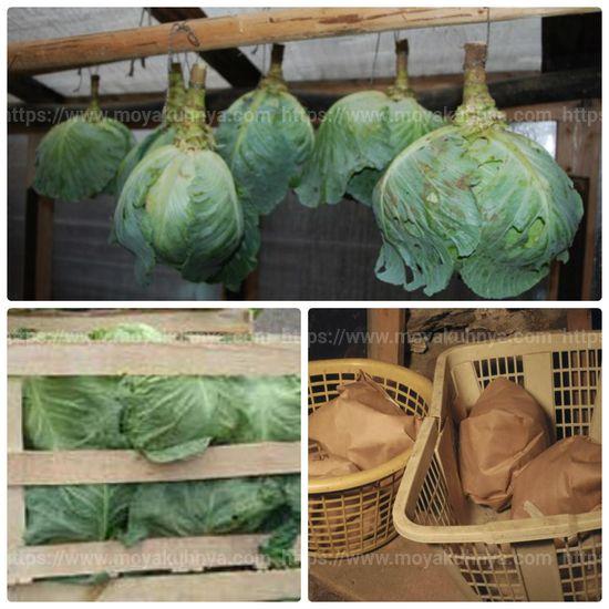 как хранить капусту в подвале